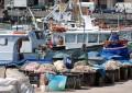 Pesca Abruzzo: pubblicato avviso per imprese
