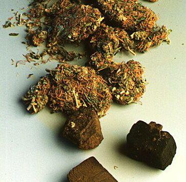 hashish e marijuana