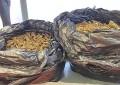 Pescara: 5 kg di marijuana in casa, 50enne denunciato