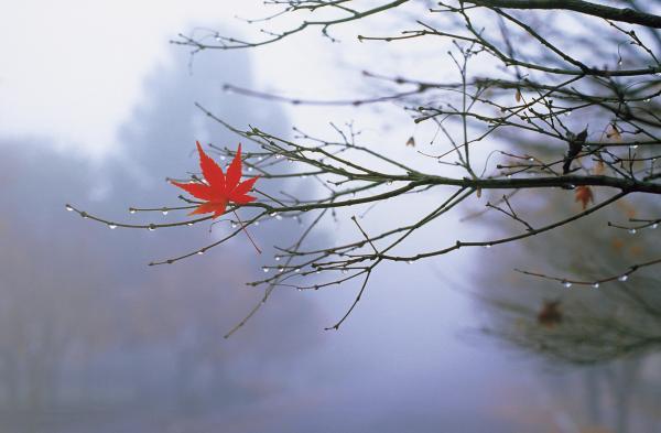 invernofoglia1