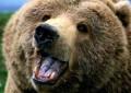 Capistrello: in paese arriva l'orso