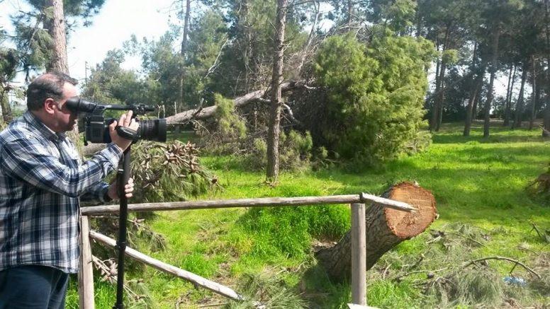 pineta montesilvano alberi