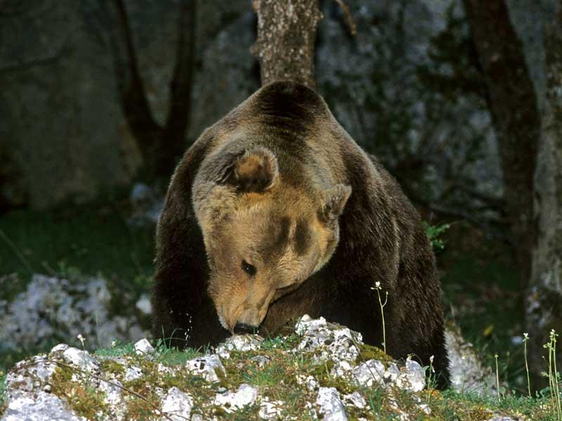 Pnalm: dopo il letargo, avvistati i primi orsi