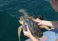 Sei tartarughe marine rilasciate in mare a Pescara