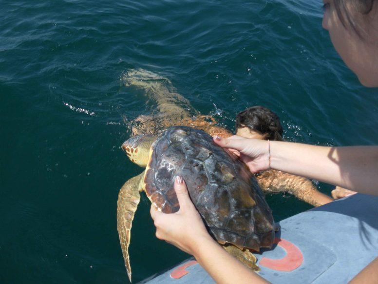 rilascio in mare tartarughe
