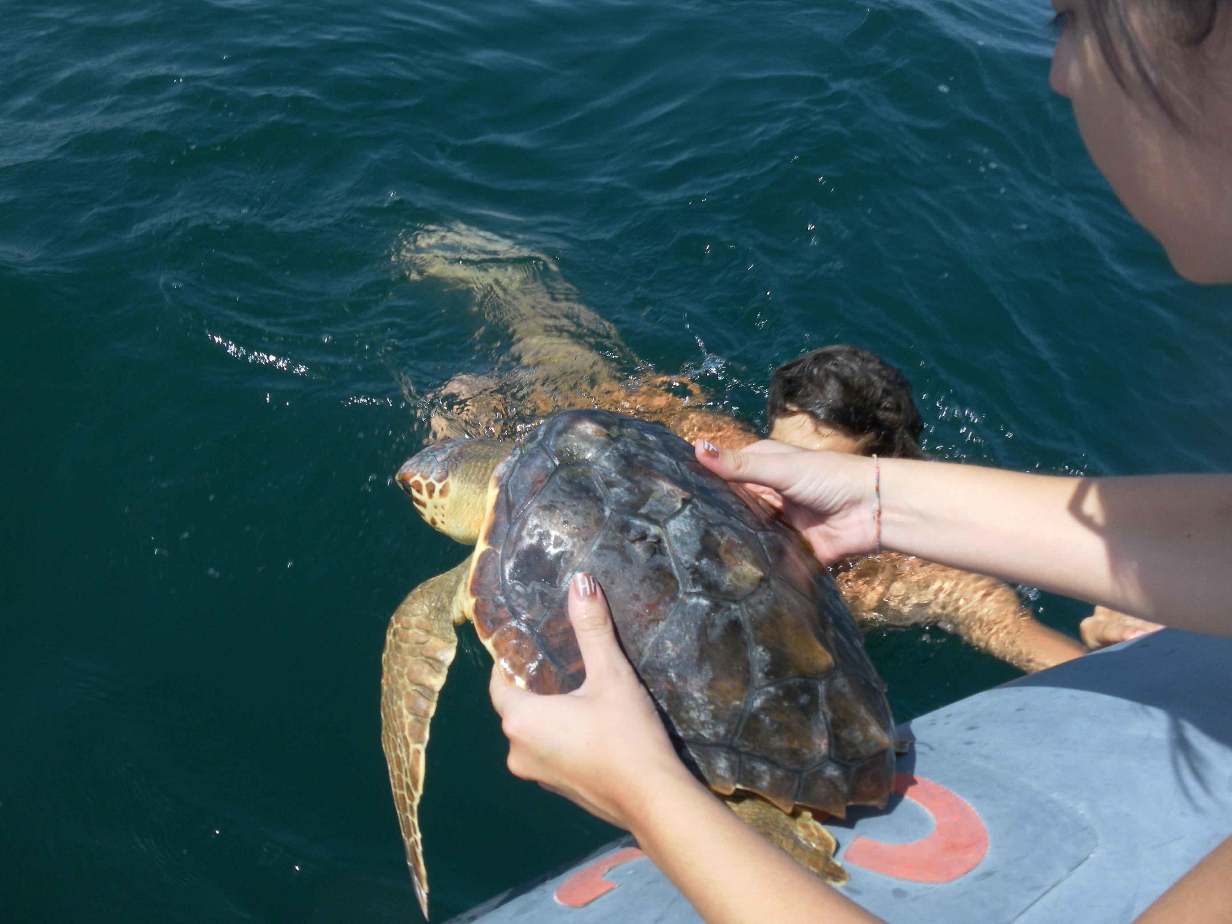 Pescara: morta una delle tre tartarughe recuperate