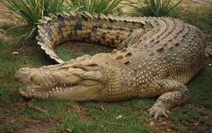 La Forestale e il coccodrillo trovato al porto di Ortona
