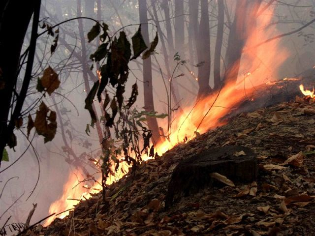Incendi: In fiamme le campagne pescaresi