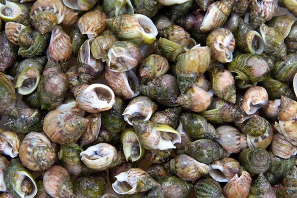Niente pesce, al via il fermo biologico in Adriatico