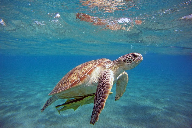 Peschereccio recupera e salva 3 tartarughe