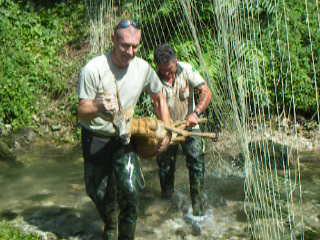 La Forestale salva un capriolo a Bussi
