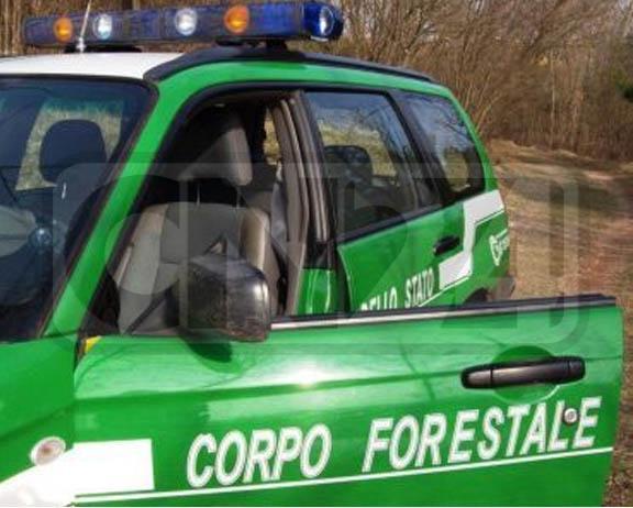 forestale-macellazione1