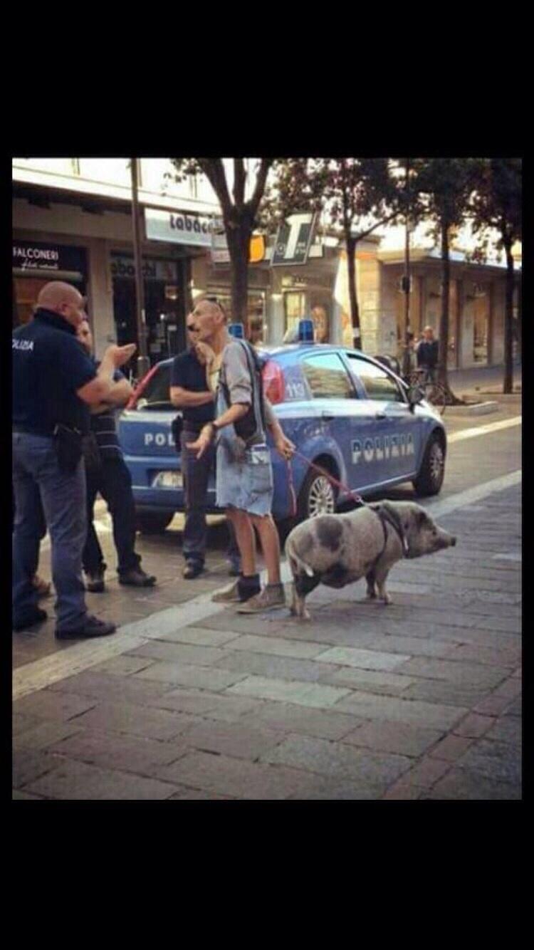 Una Maialina a Pescara: è lei la vera Star
