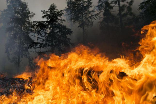 A Pescina un altro bosco abruzzese distrutto dalle fiamme