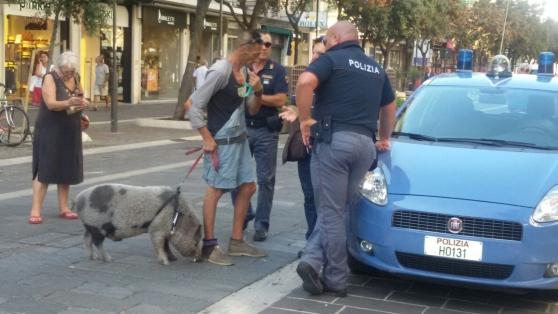 Pescara: la maialina superstar è in salute!