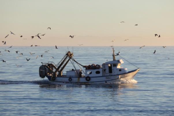 Coldiretti chiede lo stop alla pesca nella Fossa del Pomo