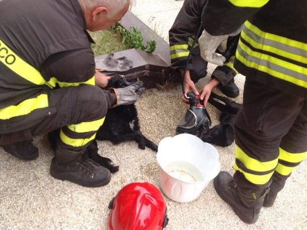 Teramo: fiamme al canile, evitata strage animali