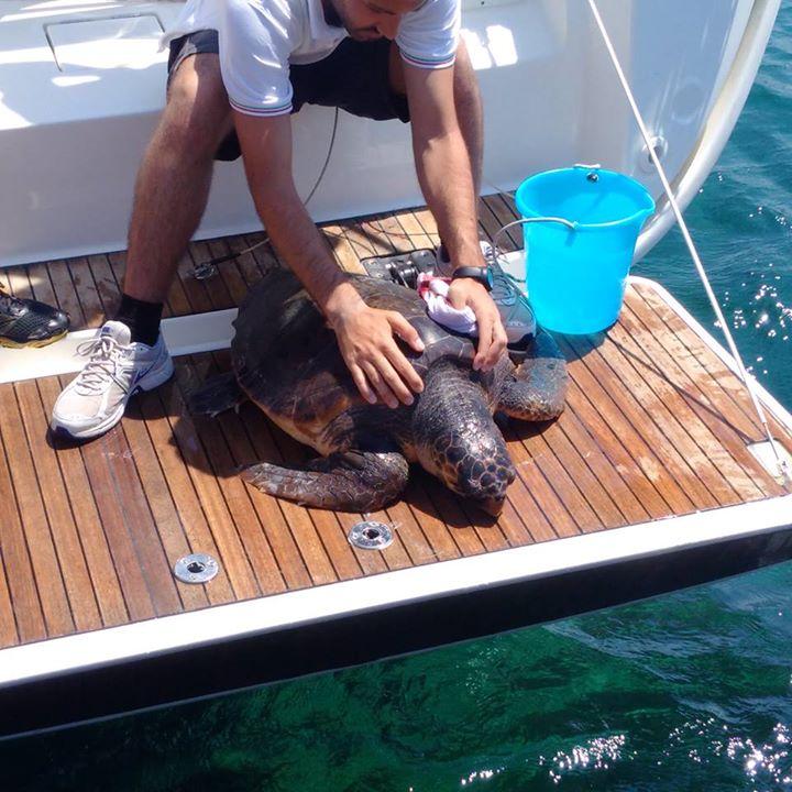 Vasto, tartaruga liberata in mare