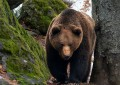 Campo di Giove: orso nel centro abitato