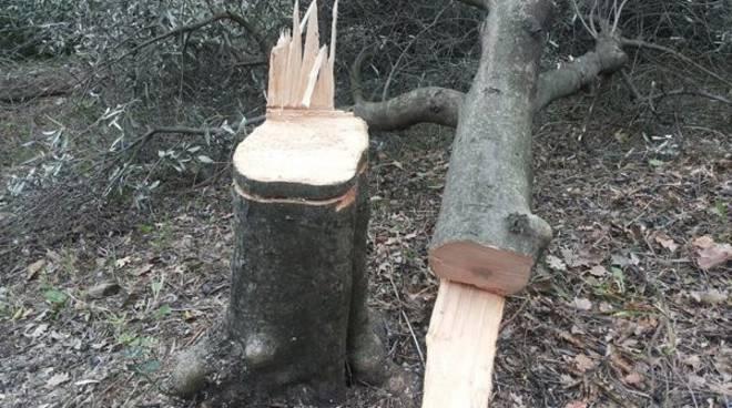 Spoltore: per prendere bici segano albero