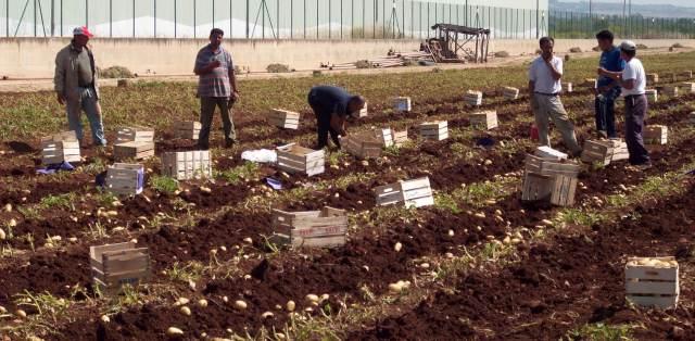 Caporalato nella Marsica- Interpellanza ministeriale di Melilla