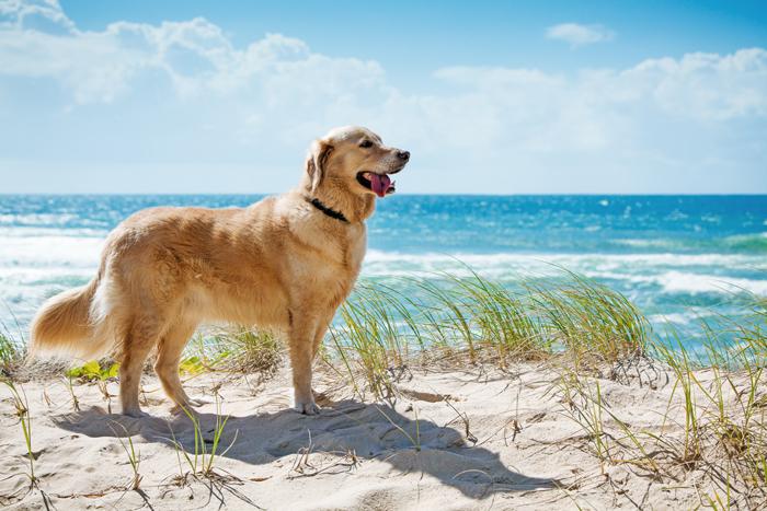 Spiaggia cani Giulianova: Tar rigetta ricorso animalisti