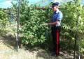 Marijuana in Valle Roveto: Arrestati due giovani