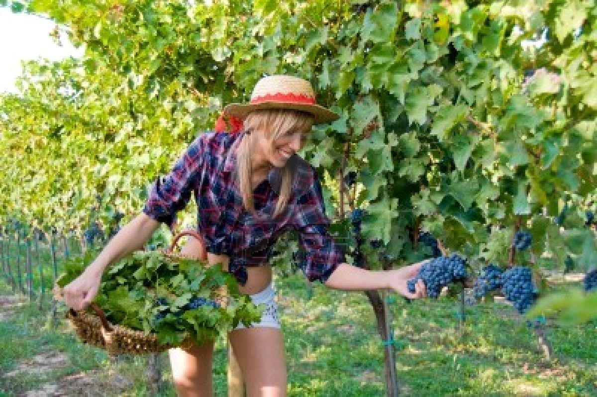 Vendemmia 2016 Abruzzo: una buona annata