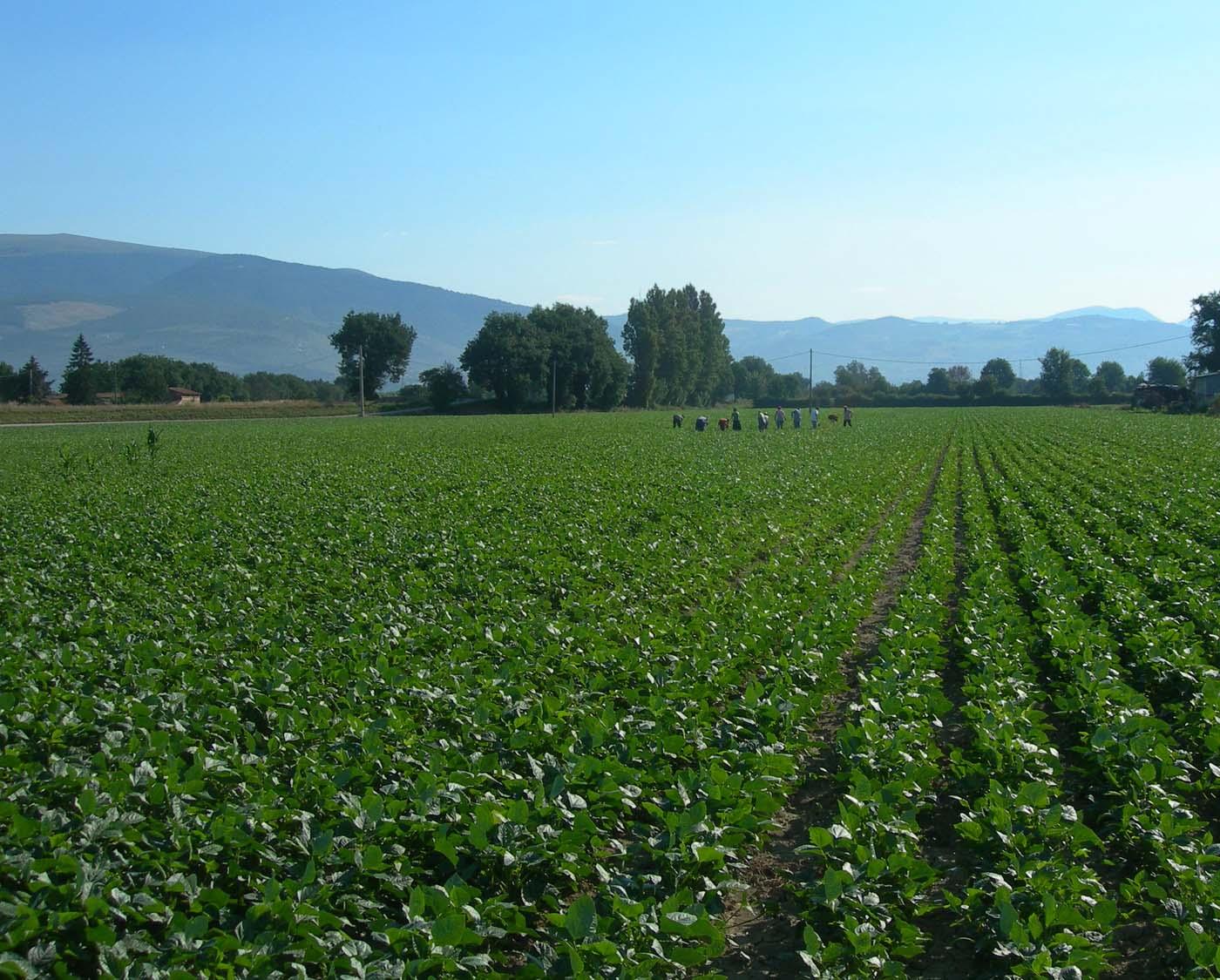 Gal teramano, focus sull'economia rurale