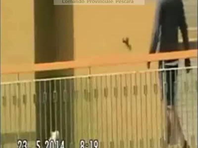 Maltratta cane a Montesilvano,  rinviato a giudizio