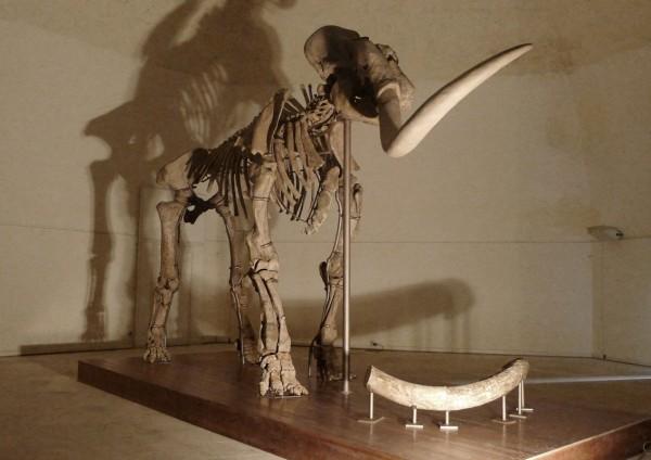 Mammuth L'Aquila, un milione di anni e non sentirli