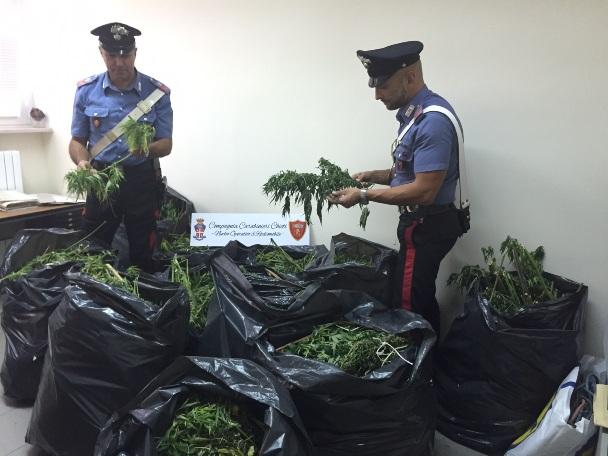 Coltiva marijuana a Ortona, arrestato