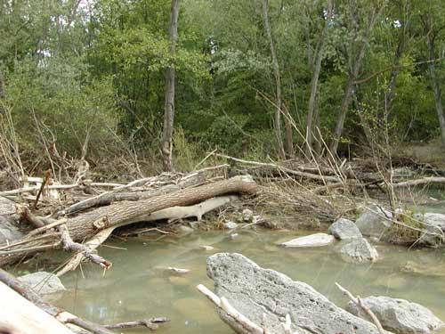 A Fossacesia i tronchi 'soffocano' il fiume