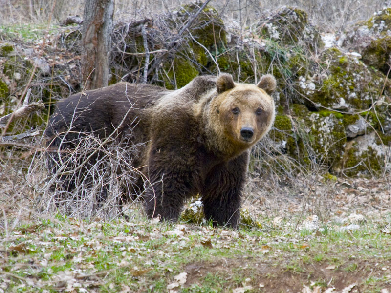 sandrino-orso1