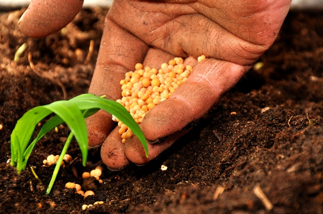 agricoltura-psr-2014-20
