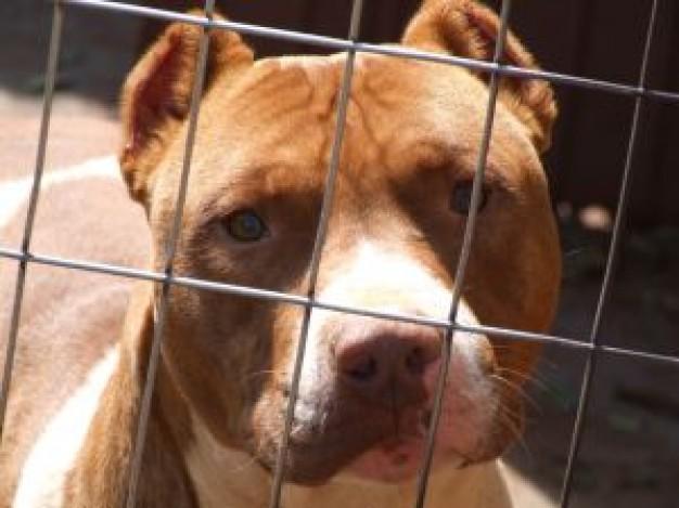 Cani maltrattati a Campli