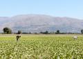 Abruzzo: 46 mln per i danni del terremoto all'agricoltura