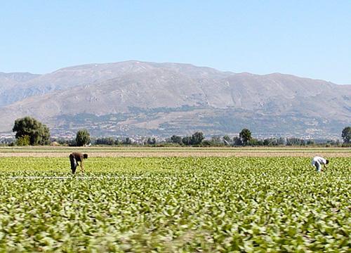 fucino-agricoltura