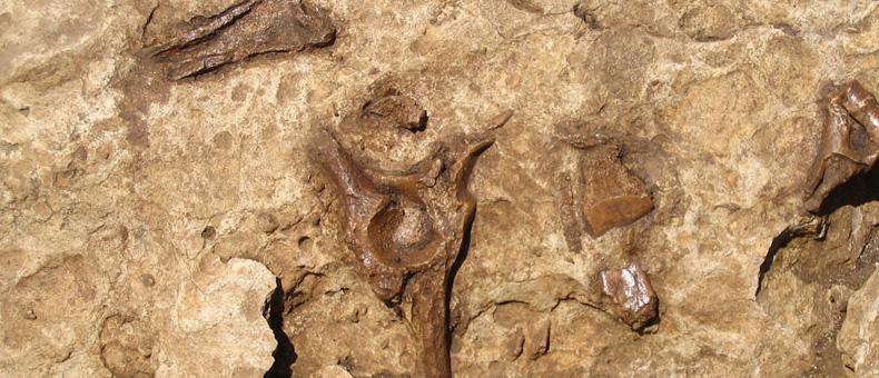 miocene-abruzzo