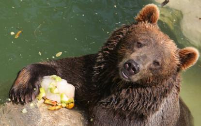 """Abruzzo: orsi """"mangioni"""", porte metalliche per i pollai"""