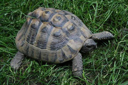 Maltempo nella Marsica, storia di una tartaruga salvata