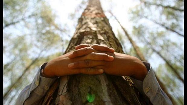 Pescara: Imparare ad abbracciare gli alberi