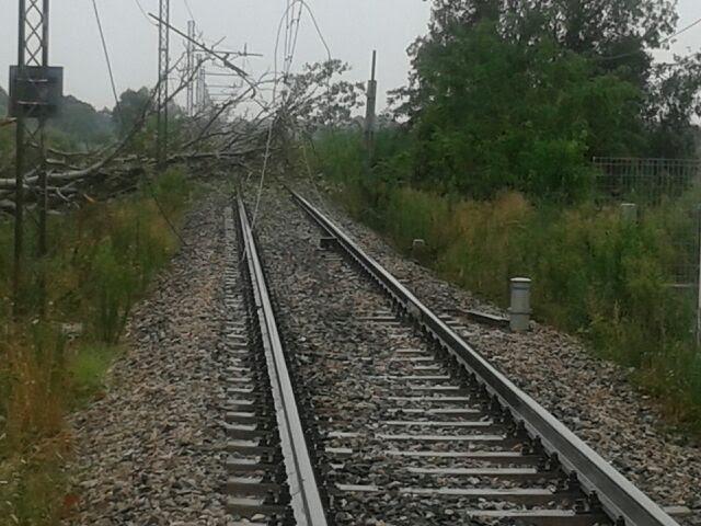 Maltempo: Avezzano-Sulmona treni sospesi per alberi caduti