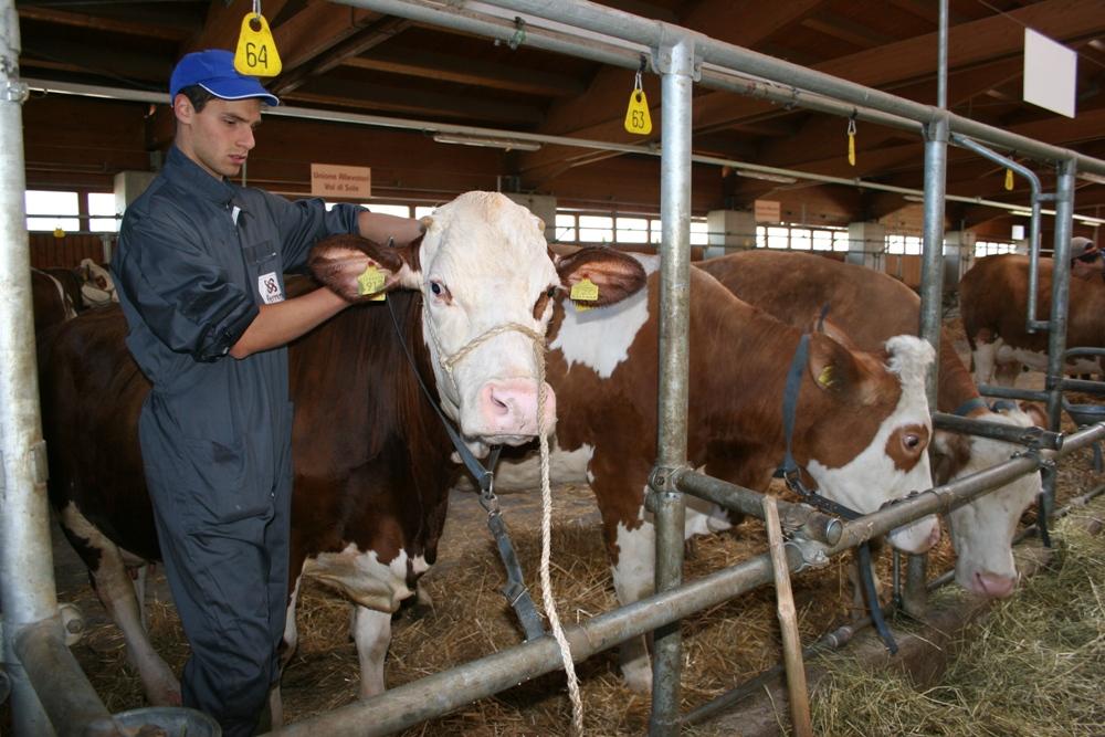 Sisma, aziende agricole senza aiuti da oltre 6 anni