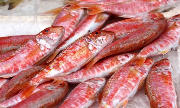 Pesca ai raggi x in Abruzzo e Molise