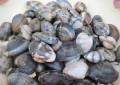 Pescara, vongole e mulluschi vietati per la salmonella