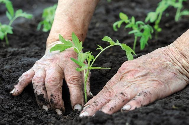 Spoltore: un bando per la concessione di terreni da coltivare