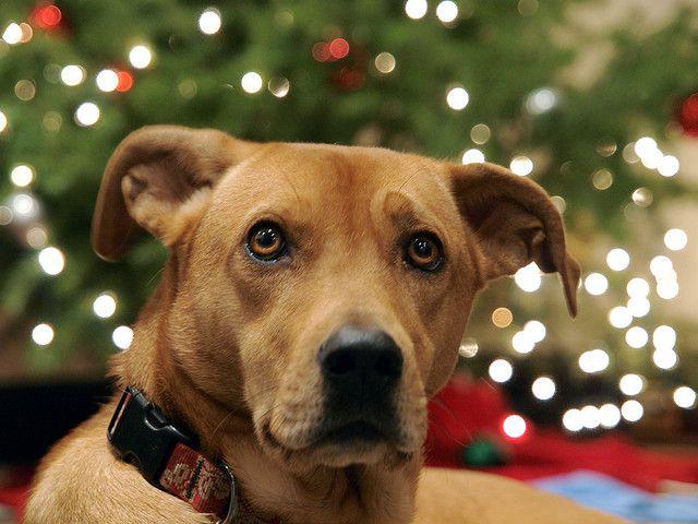 Botti vietati a Silvi e Pineto per tutelare i cani