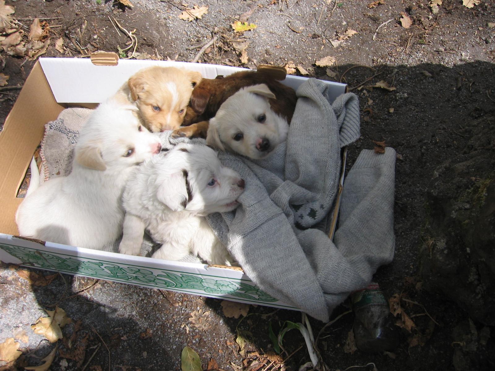Fresagrandinaria: cagnolini abbandonati in una busta