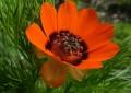Parco Gran Sasso: primato europeo per numero di piante